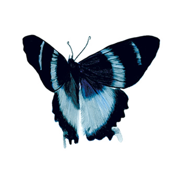 Blue Elegance Butterfly Temporary Tattoo