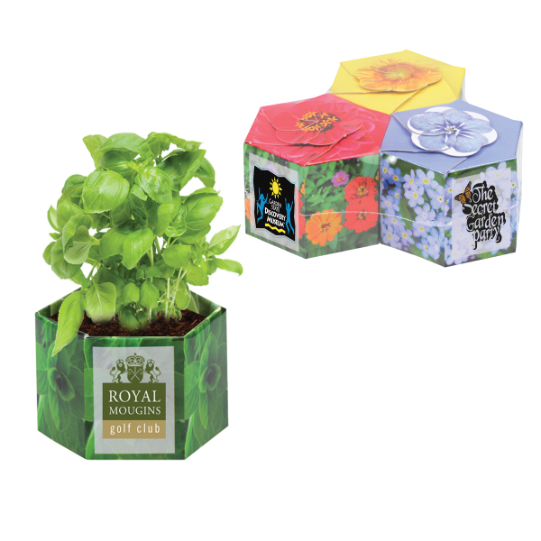 Pop Up Planter 3 Pack