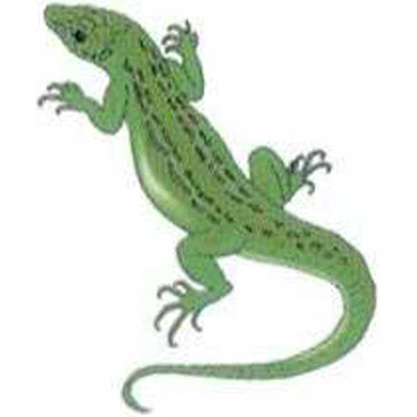 Customized Temporary Green Reptile Tattoos